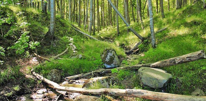Piekberg liegt im Wald auf Jasmund