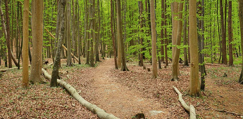 Hügel, Großsteingräber, Burgwälle und Opfersteine in der Stubnitz