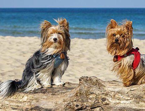 Urlaub mit Hund in Sassnitz