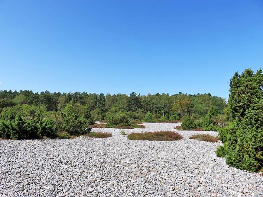 Feuersteinfelder Rügen bei Neu Mukran